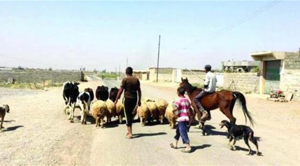 العشائر العربية تعود إلى قراها في أطراف الموصل