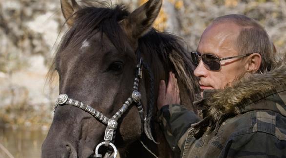 بوتين يعود لارتداء الزي المموه لتحرير الخيول البرية