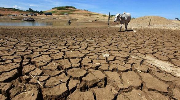 الممثل الإقليمي لـفاو: التغير المناخي تحد كبير للمنطقة العربية
