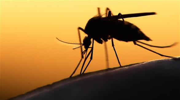 الصحة العالمية: زيكا لا يشكل حالة طوارئ في العالم