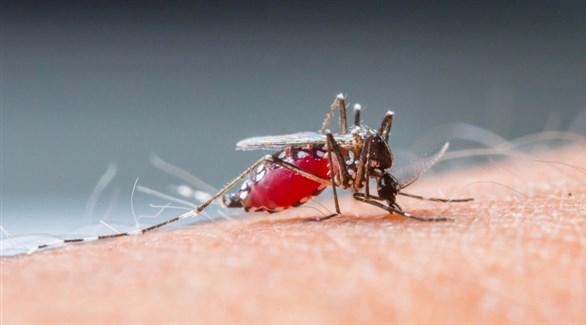 اخبار الامارات العاجلة 2016111820439500P5 منظمة: توفير التمويل للمرحلة التجريبية لأول لقاح ضد الملاريا في العالم أخبار الصحة  الصحة