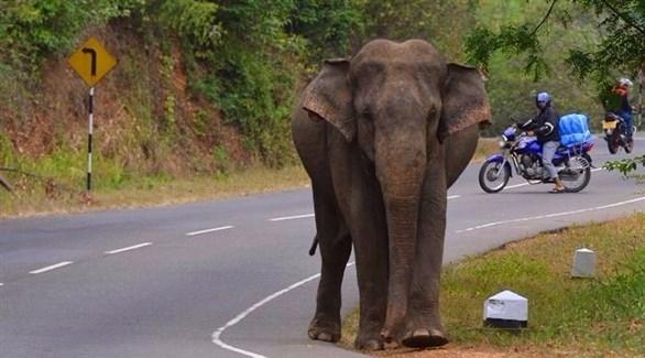 فيل (أرشيف)