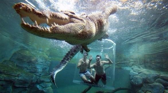 سائحان داخل الكبسولة الزجاجية في مواجهة مع تمساح مفترس (ميرور)