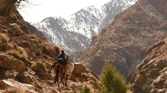 قروي مغربي يمتطي دابة بين جبال الأطلس الكبير (أرشيف)