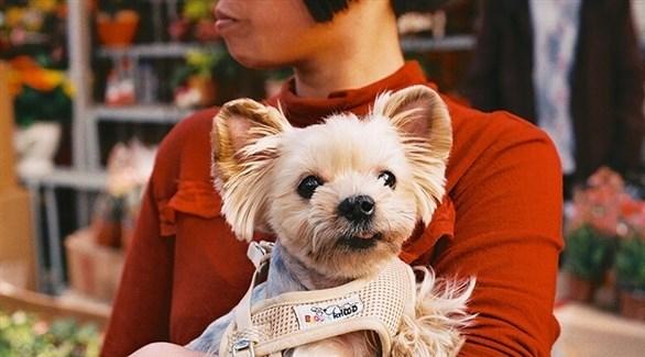 سيدة تحتضن كلباً من سلالة صينية غير شرسة (أرشيف)
