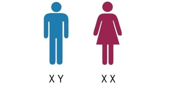 كروموسوم XX يمنح المرأة عُمراً أطول من الرجل