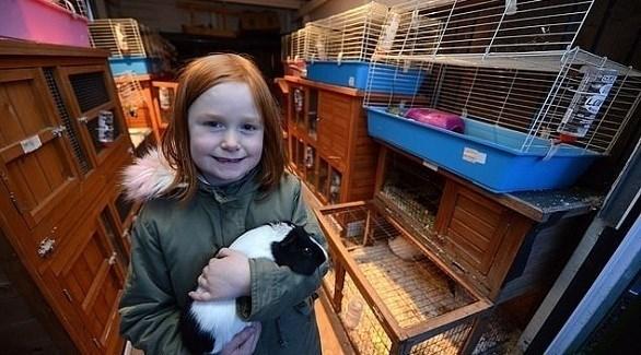 بوبي ويلي تعتني بالأرانب في المنزل (ديلي ميل)