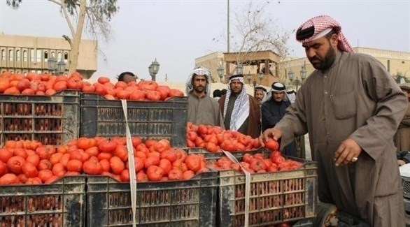 عراقي يتفقد محصول الطماطم في أحد الأسواق (أرشيف)