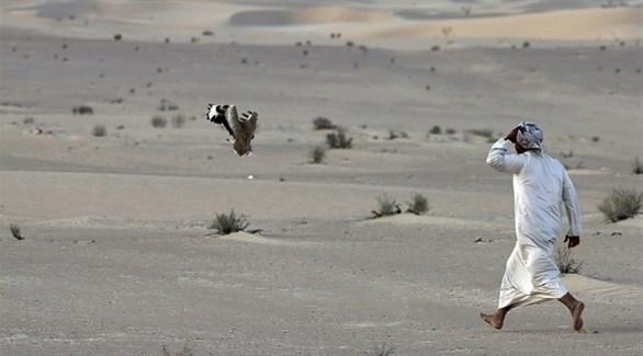 صقار وراء طائره في الصحراء (أرشيف)