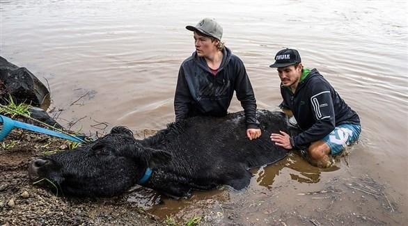 محاولة انقاذ الأبقاv من الفيضانات