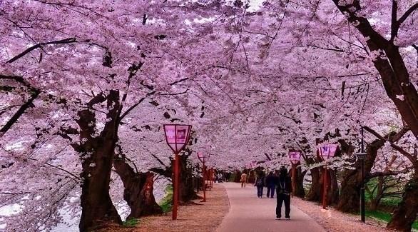 حديقة تعج بالأشجار المزهرة الساحرة في اليابان (ميرور)
