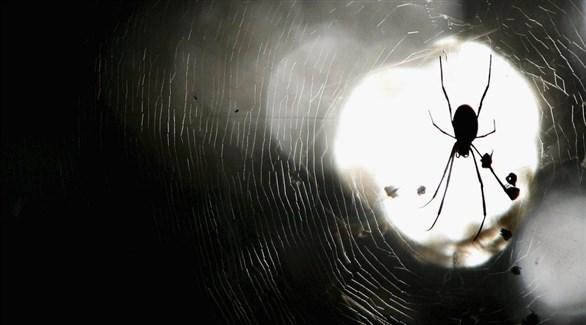 عنكبوت (تعبيرية)