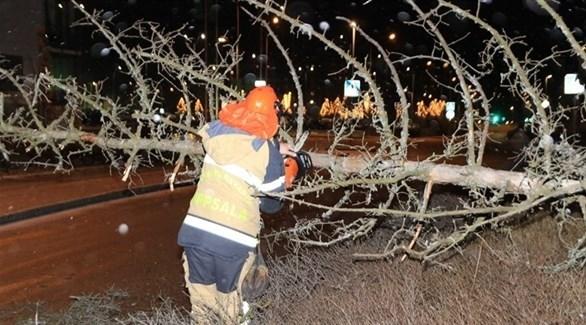 عامل يحاول إزالة أغصان الشجر لفتح الطرقات أمام السيارات