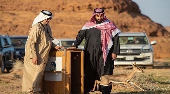 ولي العهد السعودي الأمير محمد بن سلمان في افتتاح محمية شرعان للنمر العربي (واس)