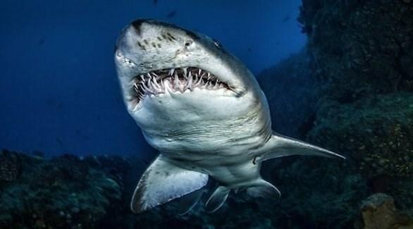 يحارب الحمض النووي لأسماك القرش العديد من الأمراض الشائعة (ستار)