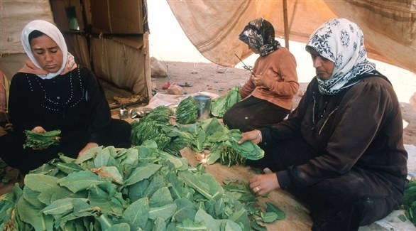 نساء تعملن في الزراعة (الأمم المتحدة)