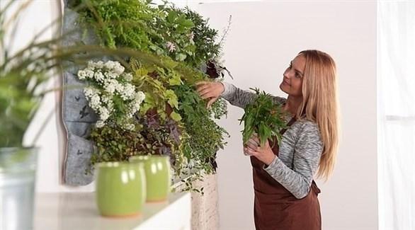 جورن فيومدال ونباتاتها المنزلية (ديلي ميل)