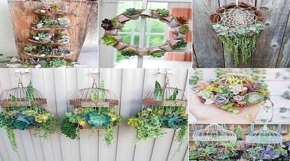 تشكيلات مدهشة للنباتات (أميزنغ إنتيرير ديزاين)