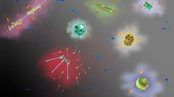رسم تصويري للميكروبات المحيطة بالطحالب الدقيقة. (من المصدر)