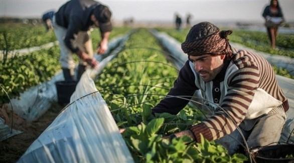 مزارع في غزة (أرسيف)