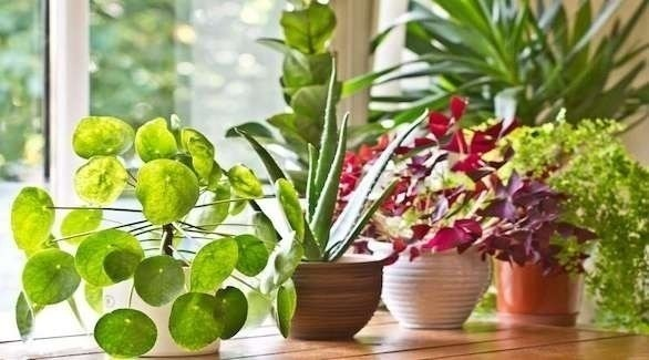 أفضل نباتات مثمرة يمكنك زراعتها في حديقة منزلك