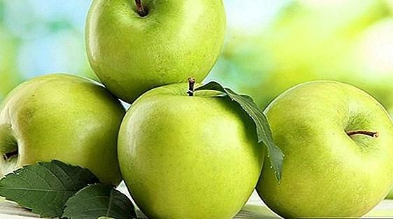 التفاح غني بالفلافونويد (تعبيرية)