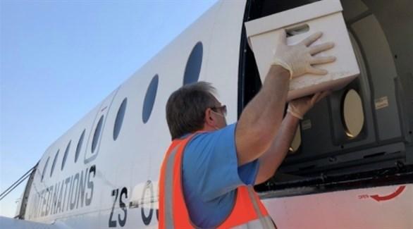 عامل بالصليب الأحمر يضع رفات مفقودين كويتيين إبان الغزو العراقي على متن طائرة أممية(تويتر)