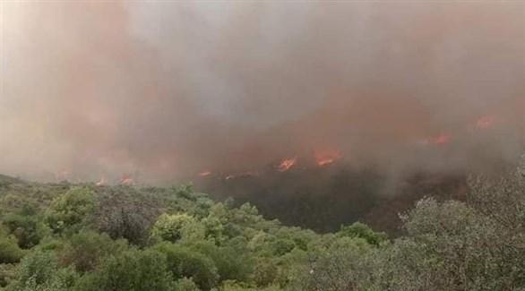 اندلاع الحرائق في الجزائر (تويتر)