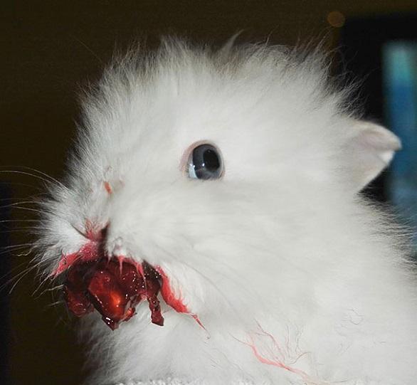 بالصور: حيوانات لا تستطيع مقاومة لذة التوت والفراولة %D9%88%D8%AD%D9%88%D8%B4%20%D8%A7%D9%84%D8%AA%D9%88%D8%AA1