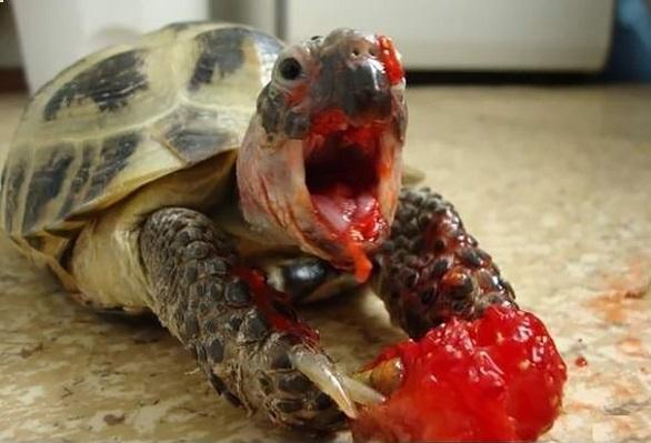 بالصور: حيوانات لا تستطيع مقاومة لذة التوت والفراولة %D9%88%D8%AD%D9%88%D8%B4%20%D8%A7%D9%84%D8%AA%D9%88%D8%AA2