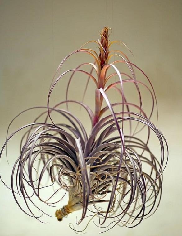 نباتات صينية تنمو الهواء