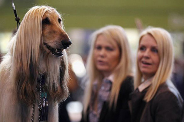 أشخاص يشبهون كلابهم فى 20 صورة طبيعية Dog15