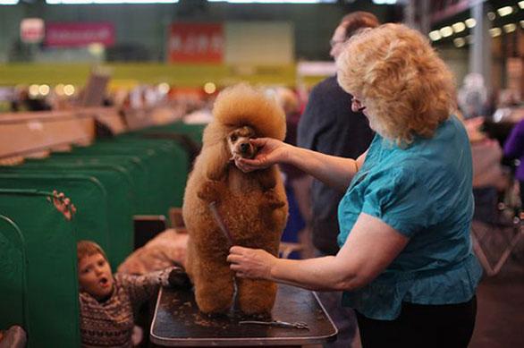 أشخاص يشبهون كلابهم فى 20 صورة طبيعية Dog7
