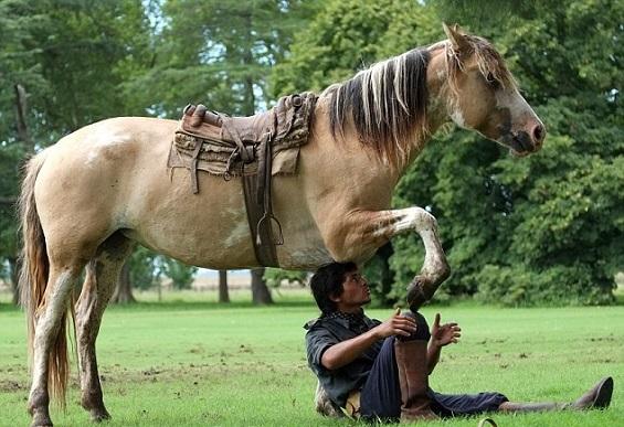 مدرسة هندية تروّض الخيول بـ اليوغا