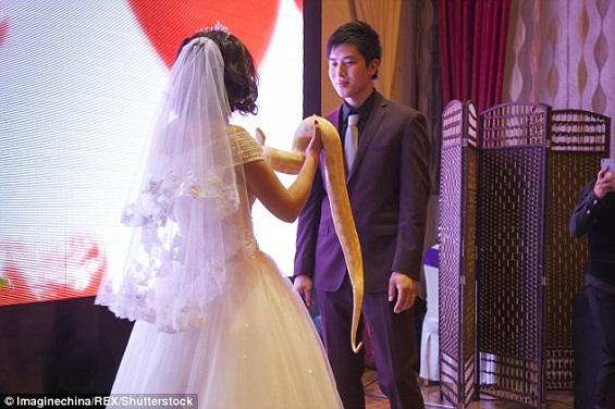 بالفيديو والصور: عروسان يتبادلان الثعابين بدلاً من خاتم الزفاف  بالفيديو والصور: عروسان يتبادلان الثعابين بدلاً من خاتم الزفاف
