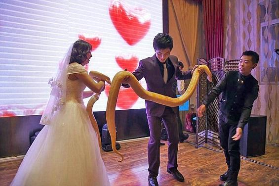 بالفيديو والصور: عروسان يتبادلان الثعابين بدلاً من خاتم الزفاف  بالفيديو والصور: عروسان يتبادلان الثعابين بدلاً من خاتم الزفاف  بالفيديو والصور: عروسان يتبادلان الثعابين بدلاً من خاتم الزفاف  بالفيديو والصور: عروسان يتبادلان الثعابين بدلاً من خاتم الزفاف